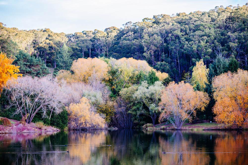 mt-lofty-lake.jpg