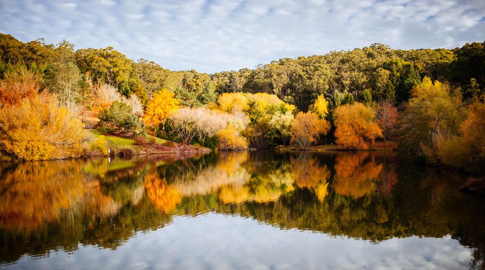 mt-lofty-gardens-lake.jpg