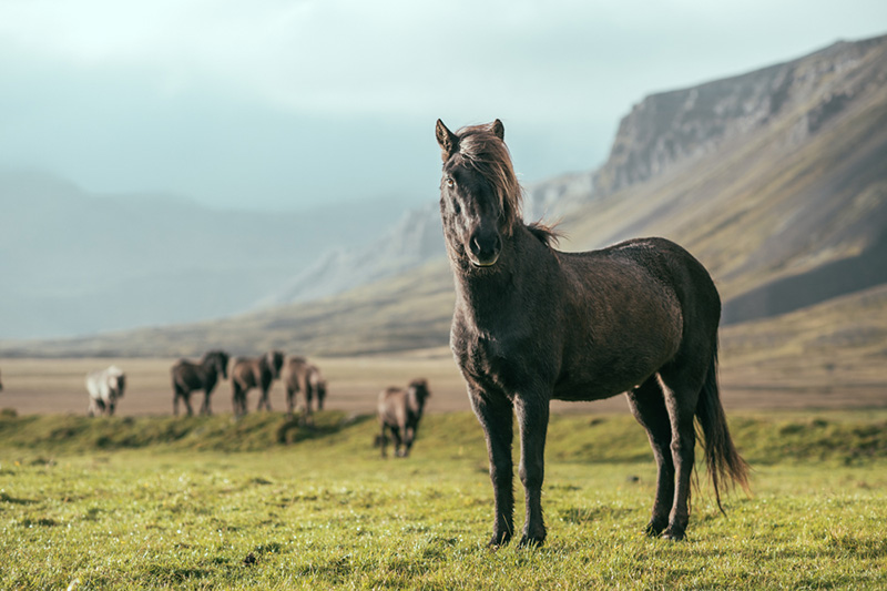 It was so cold but there was such stoicism about these Icelandic horses. I wonder if you are exposed to cold your entire life whether you just stop noticing it.