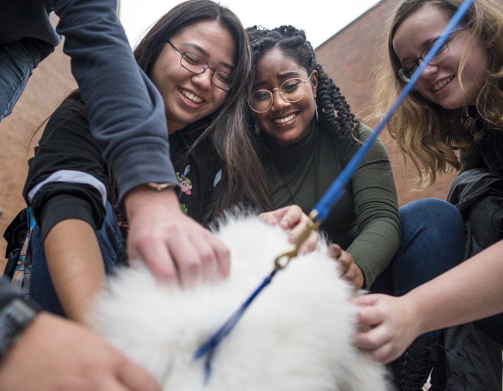 RIT's Bow Wow Wellness program brings therapy dogs to campus for students.