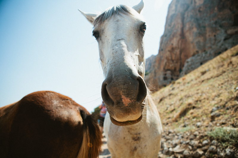 horse-mount-arbel.jpg