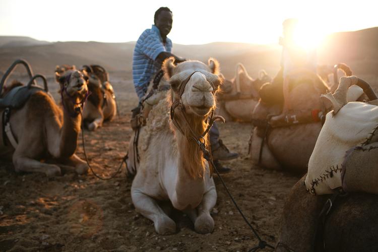 camel2-1.jpg