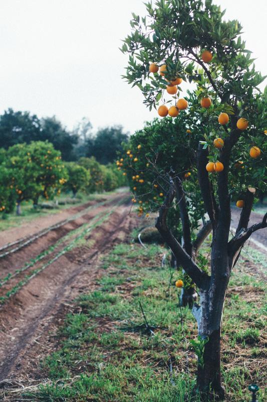 ojai farm-6.jpg