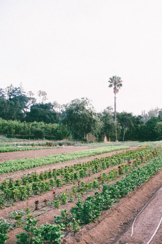 ojai farm-7.jpg
