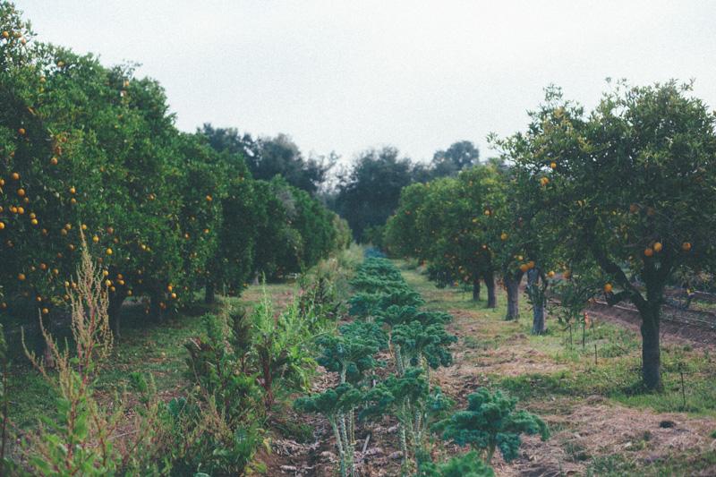 ojai farm-4.jpg