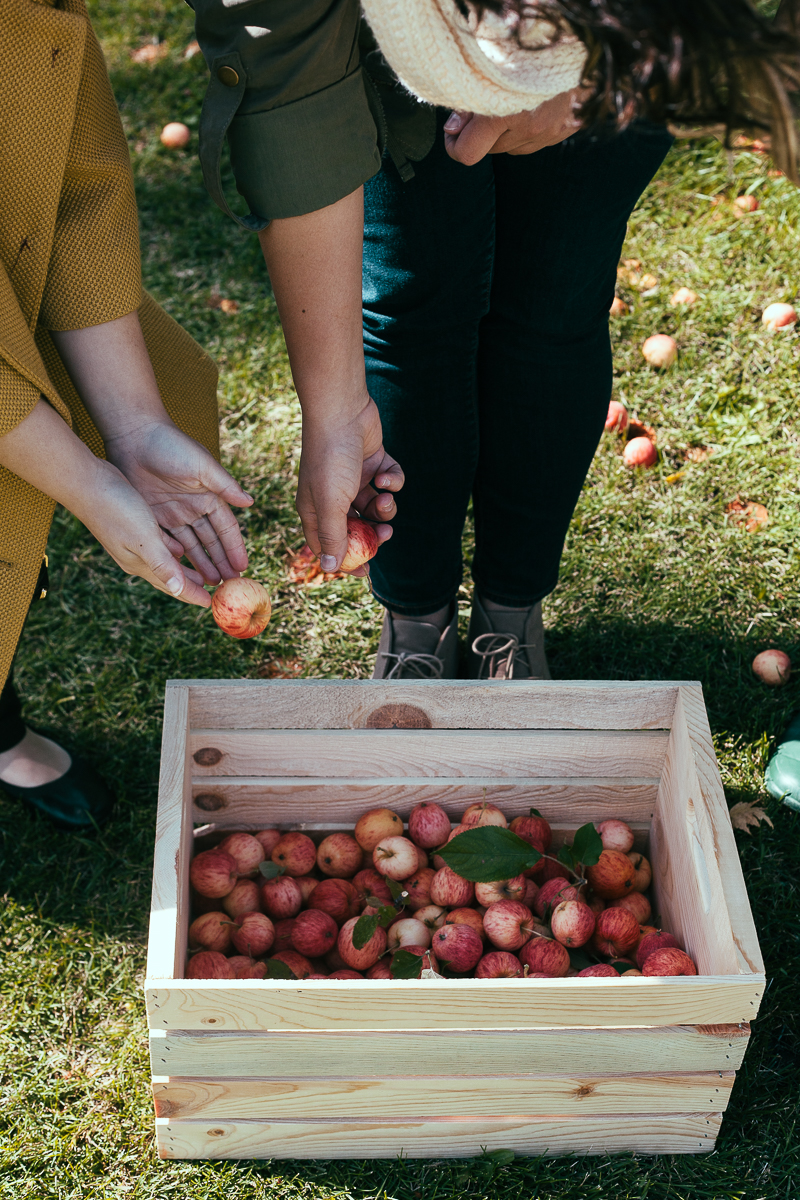apple-picking-party-8.jpg