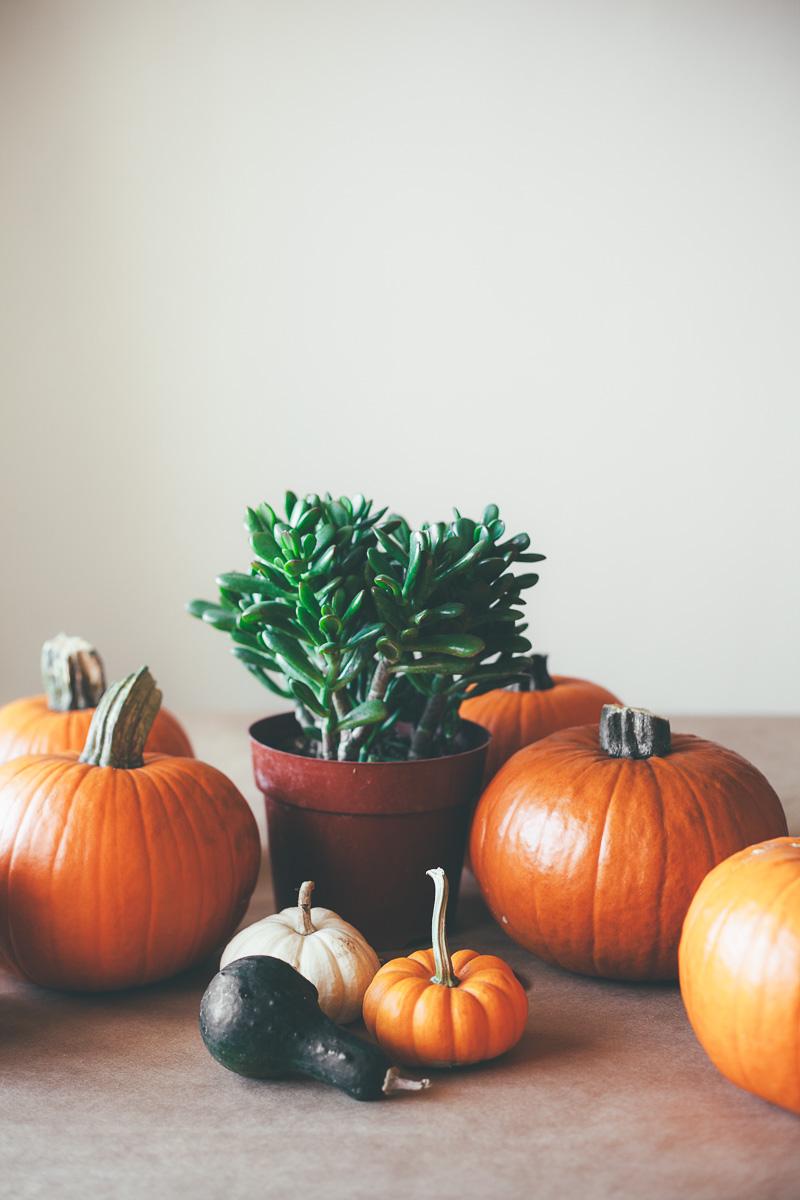 pumpkin-carving-party-11.jpg