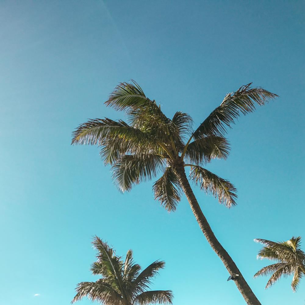hawaii 2017-19.jpg