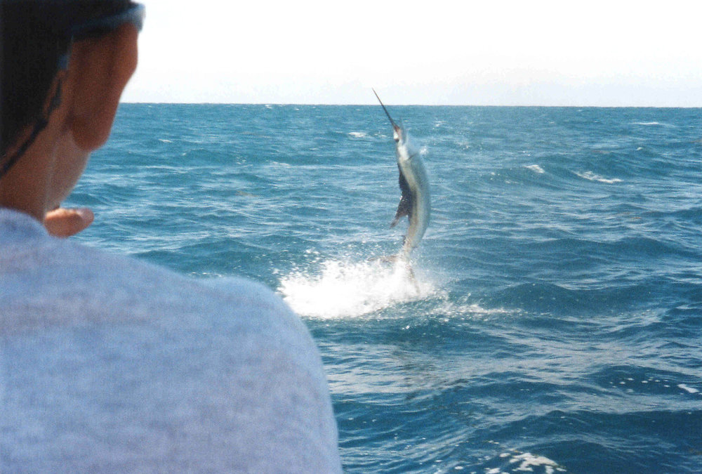 Sailfish Acrobatics.JPG