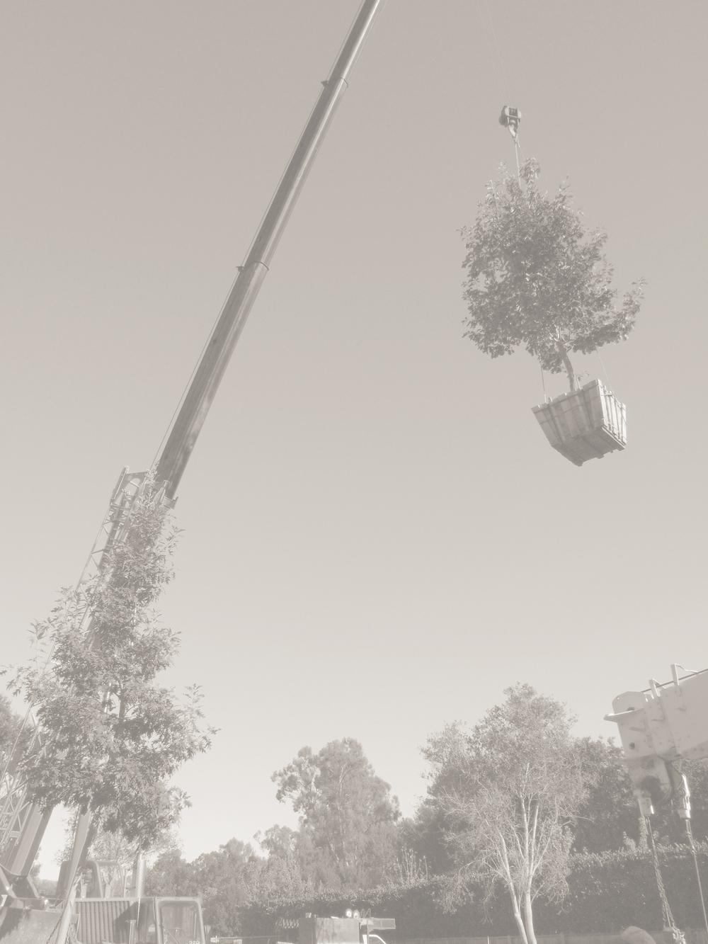 crane sepiajpg.jpg