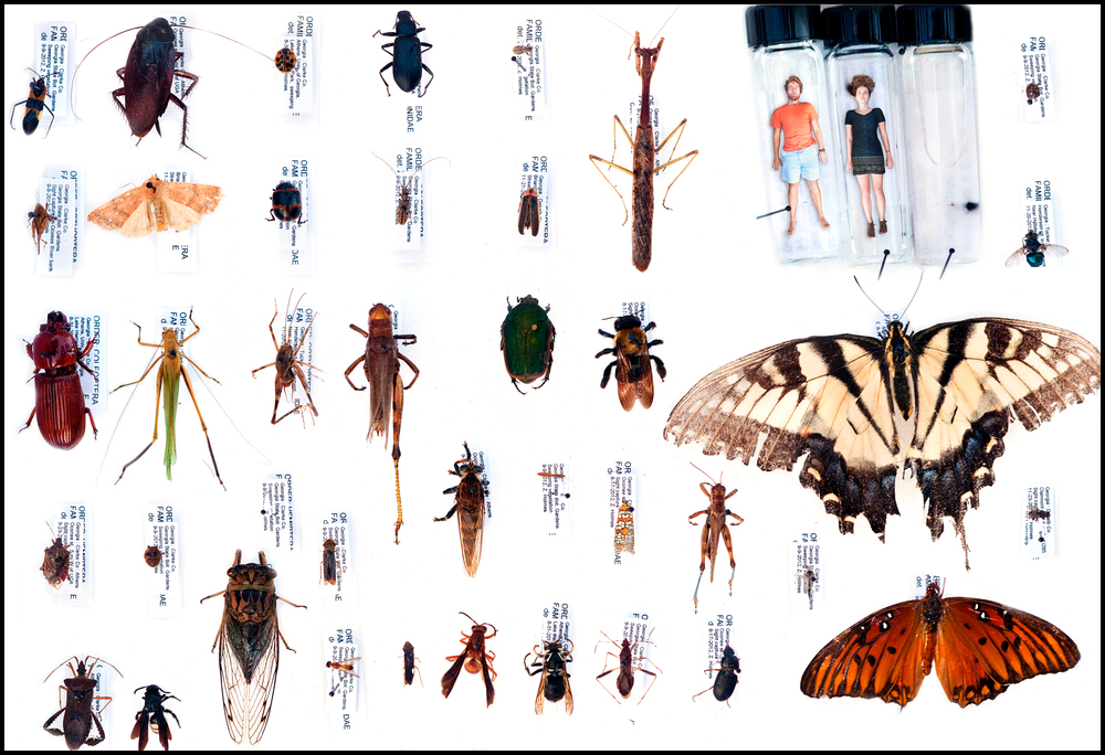 Entomology 101 : Final Project.  Click on the image for a larger view.