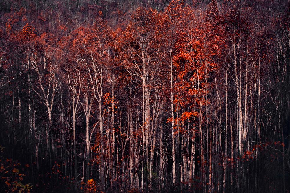 ASH-mtn-trees.jpg