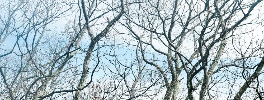 ASH-treez2.jpg