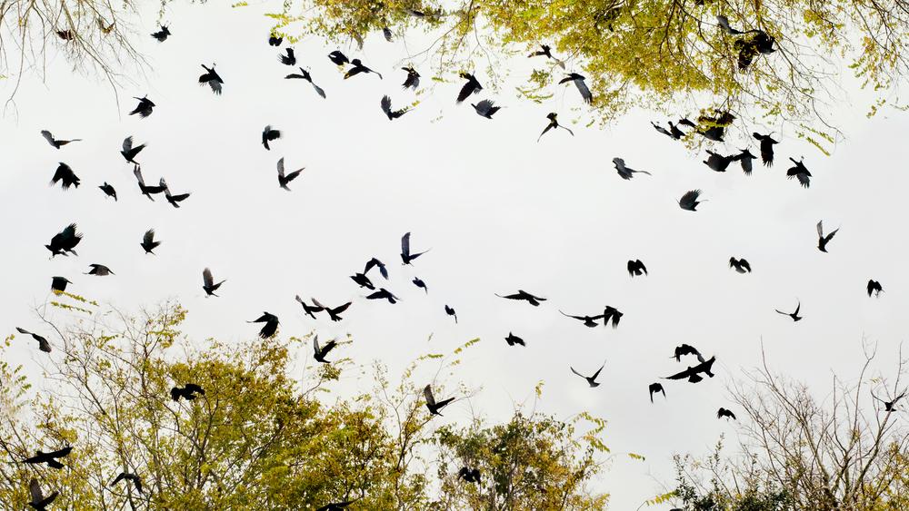 birds-circle2.jpg