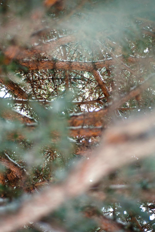 snowc-12.jpg