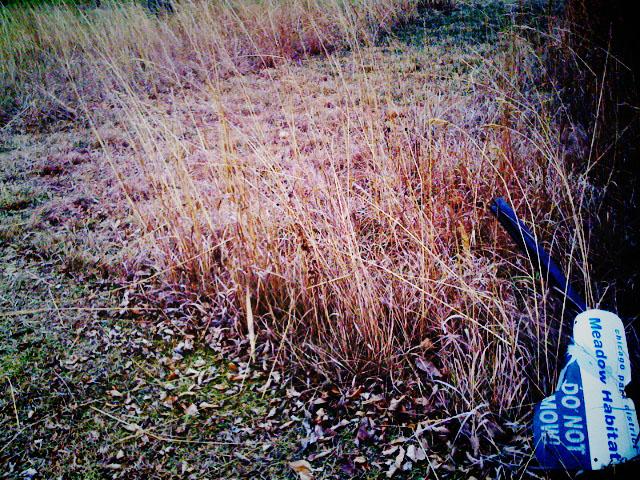 Grass Cut 4