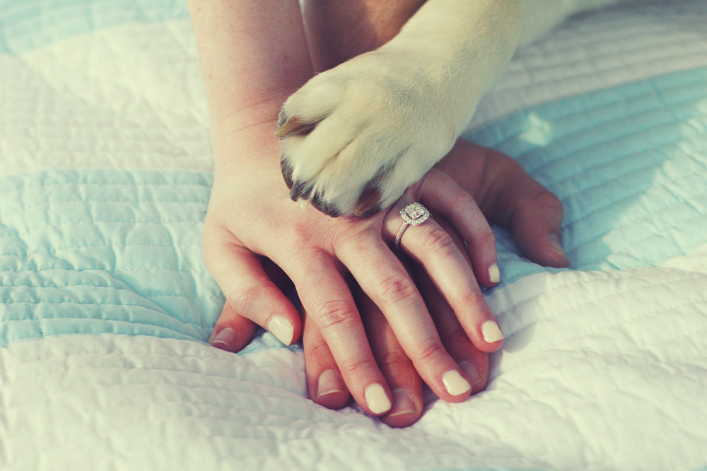 paw & hands.jpg