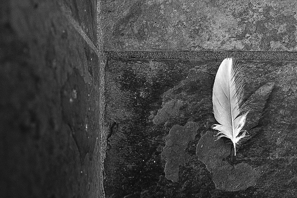 Feather on Slate Stairs