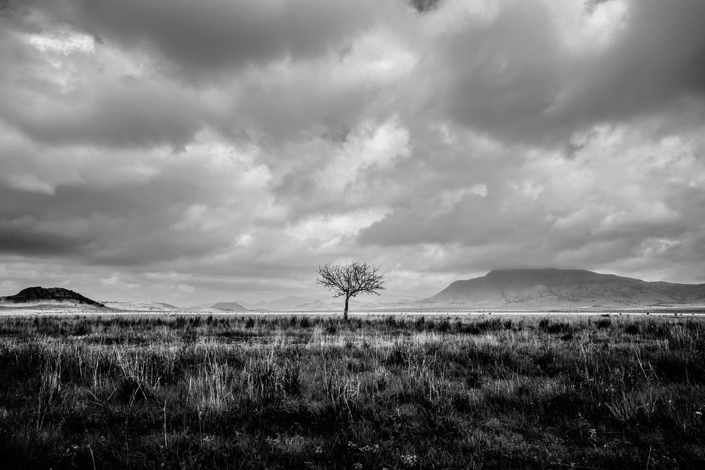 Outside Marfa, Texas - Lone Tree