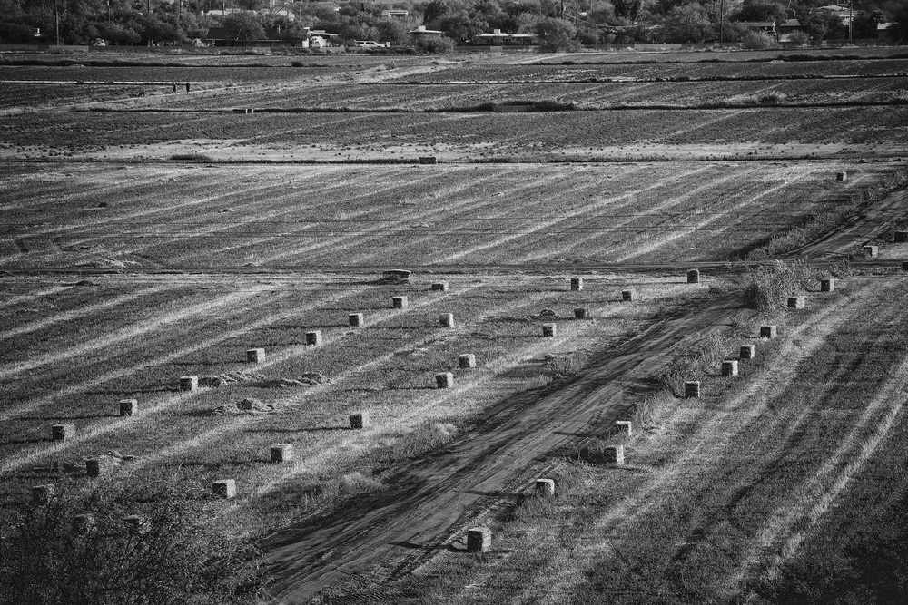 Mission San Xavier del Bac Hay Field - Tucson