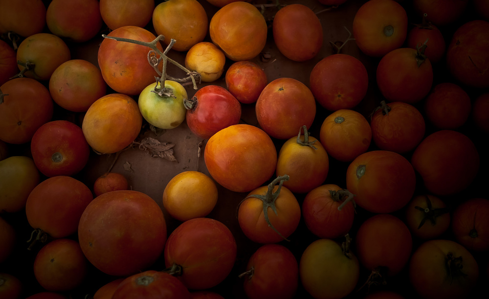 Vine-Ripened-Organically-Grown-Heirloom-Tomatoes-RGB_MG_0688.jpg
