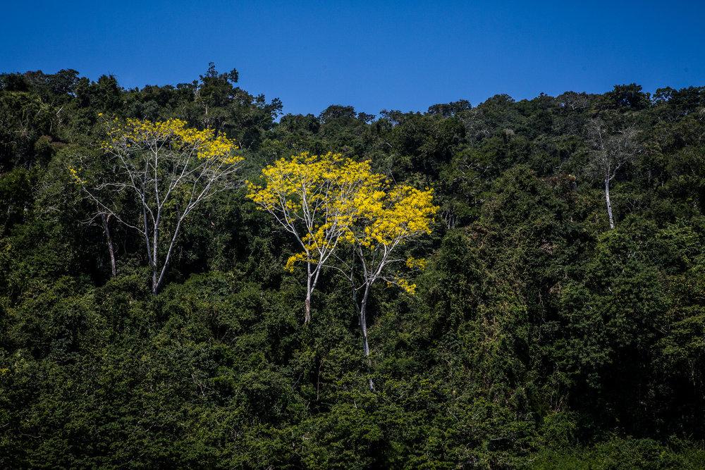 2017 - ChiapasTrip_D3_51242017 - 31.jpg