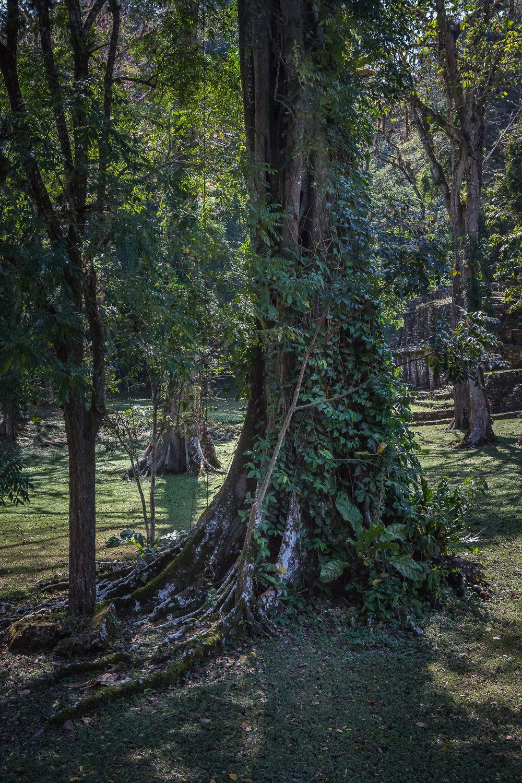 2017 - ChiapasTrip_D3_55822017 - 65.jpg