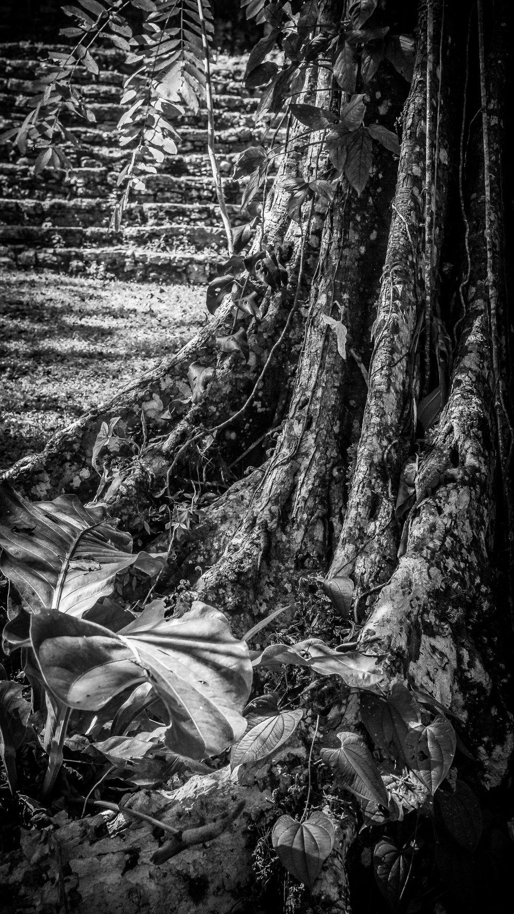 2017 - ChiapasTrip_D3_56112017 - 67.jpg