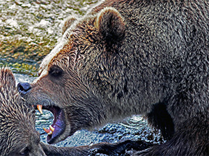 Bear-Roaring-CC-171023.jpg