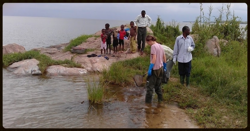 Mwanza, Lake Victoria, collecting snails