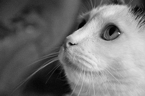 03-CatsDogs-LR.jpg