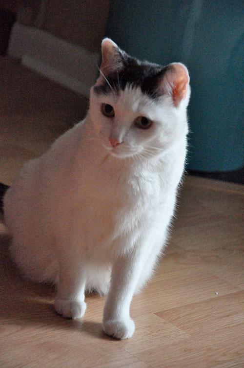04-CatsDogs-LR.jpg