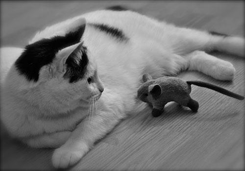 05-CatsDogs-LR.jpg