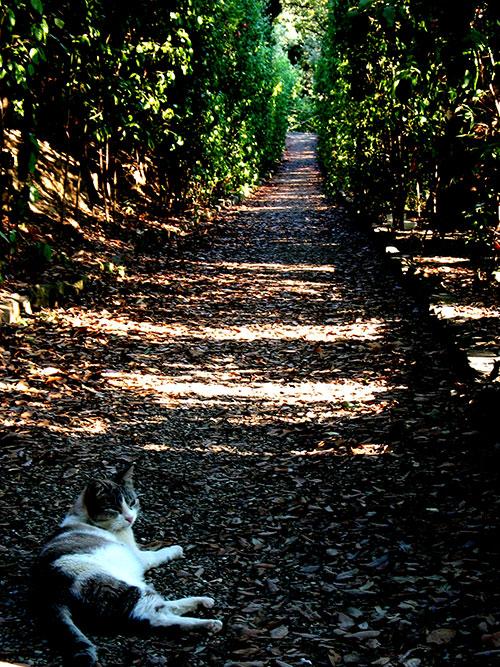 13-CatsDogs-LR.jpg