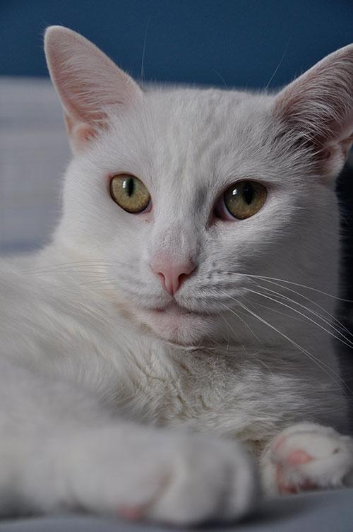 16-CatsDogs-LR.jpg