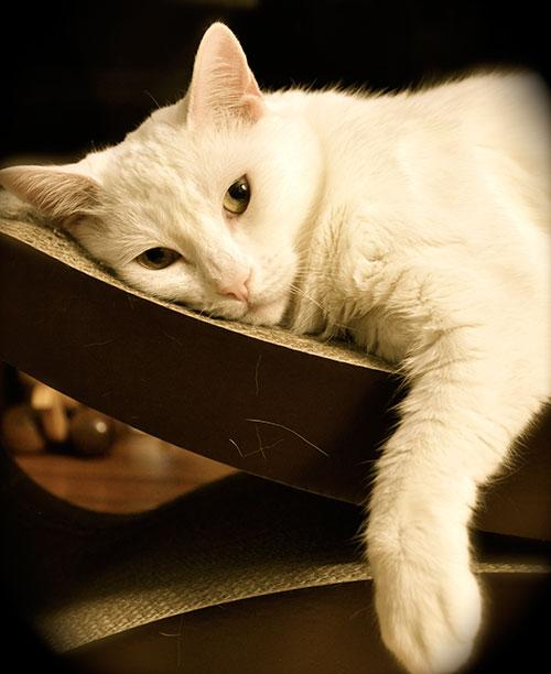 17-CatsDogs-LR.jpg