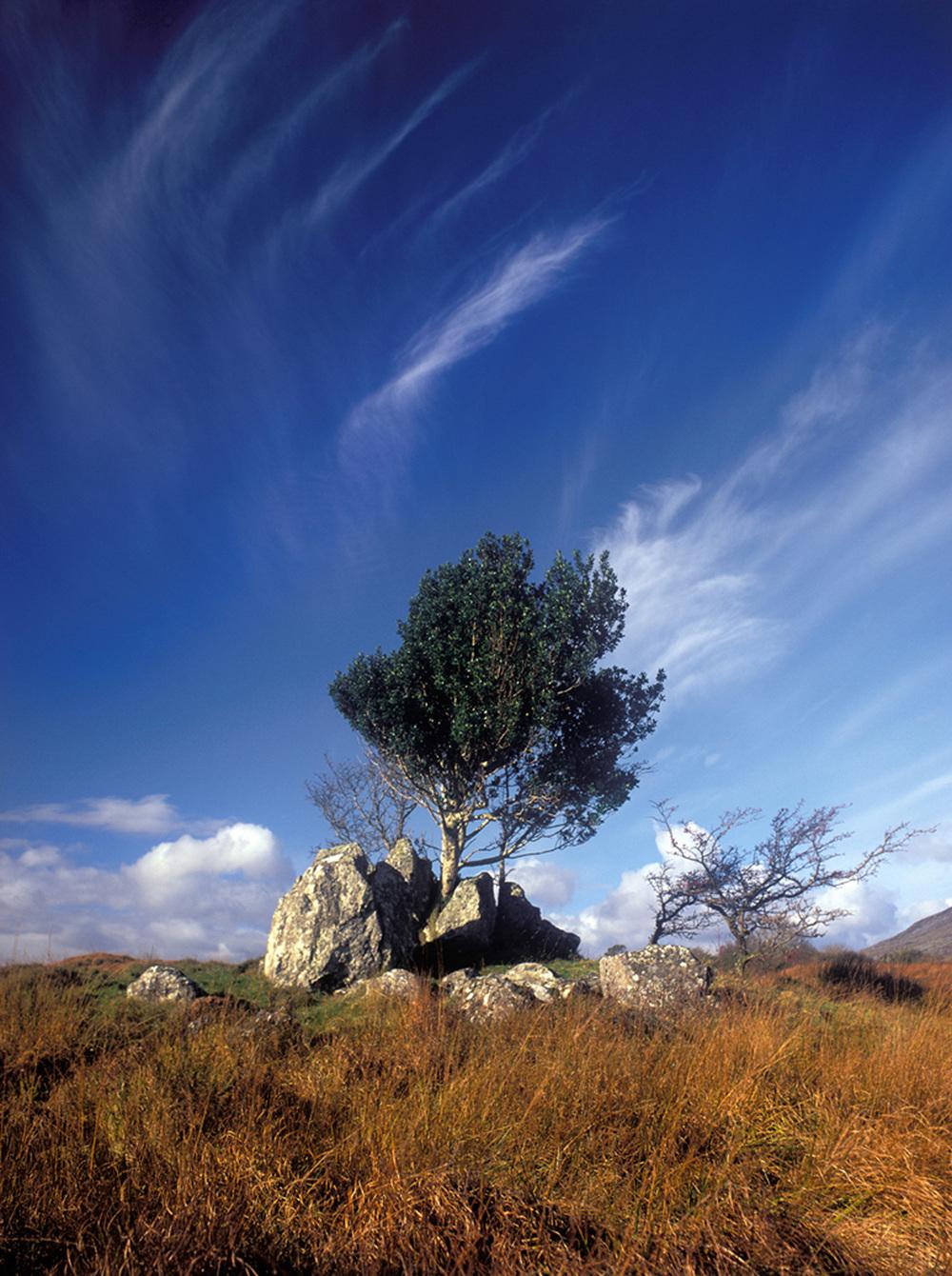 Fergus Bourke_Ethereal Tree.jpg