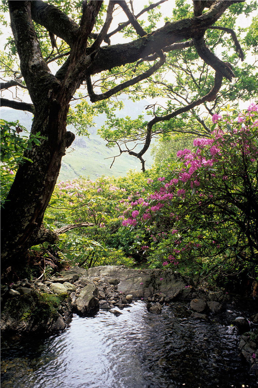 Fergus Bourke_Rhododendrons.jpg