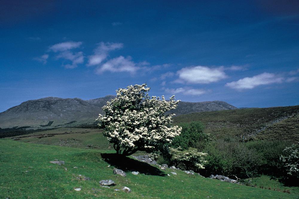 Fergus Bourke_Tree.jpg
