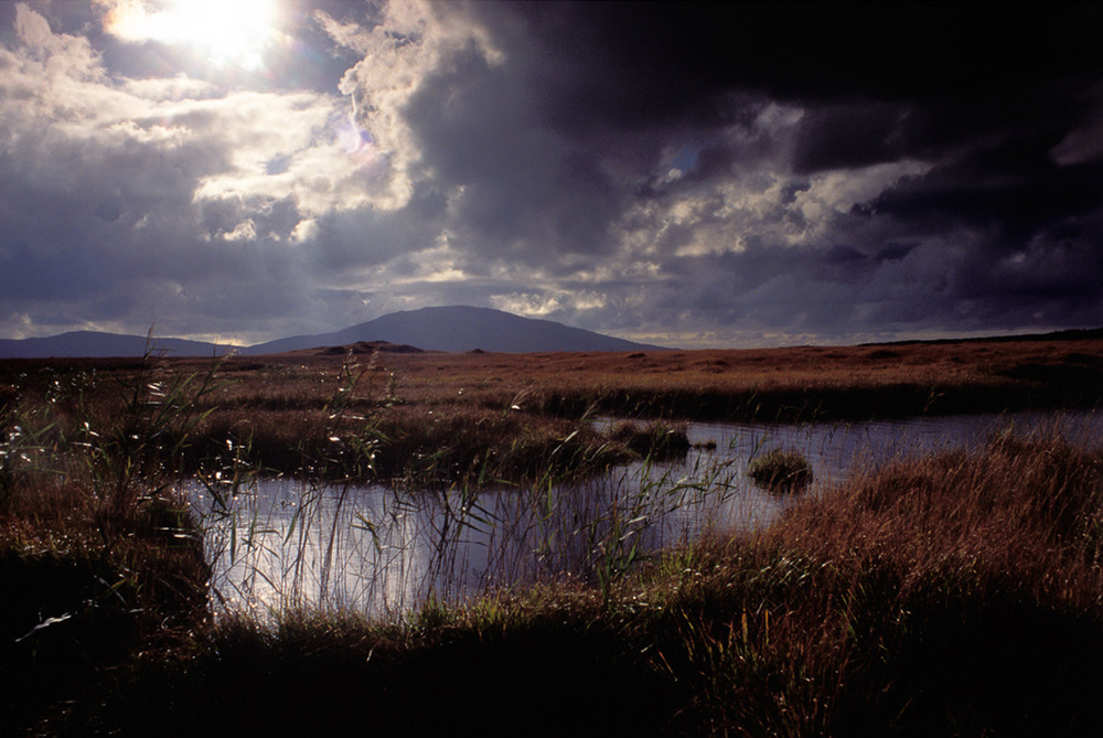 Fergus Bourke_Water Reeds.jpg