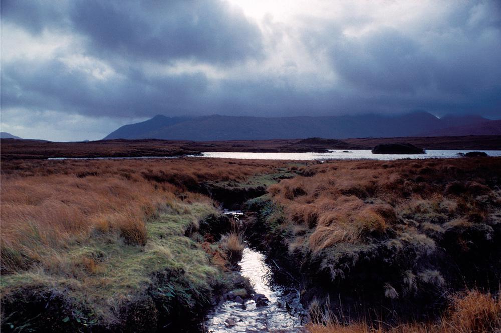 Fergus Bourke_Wetland.jpg