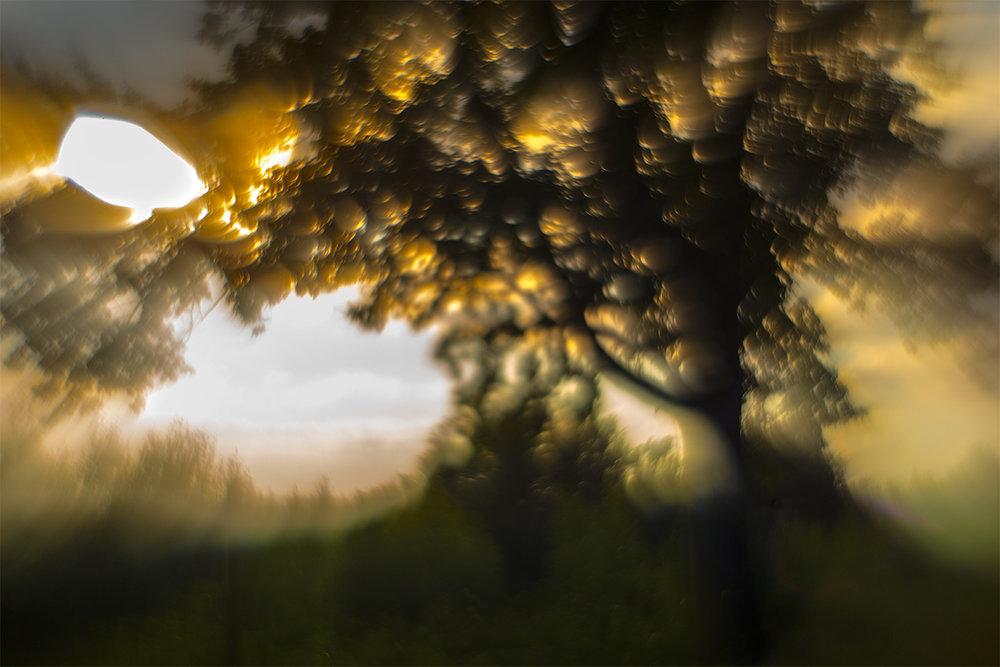 Tree_5465
