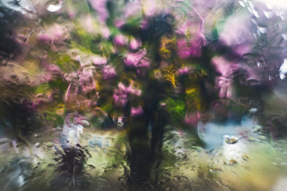 Flower-Tree_2483