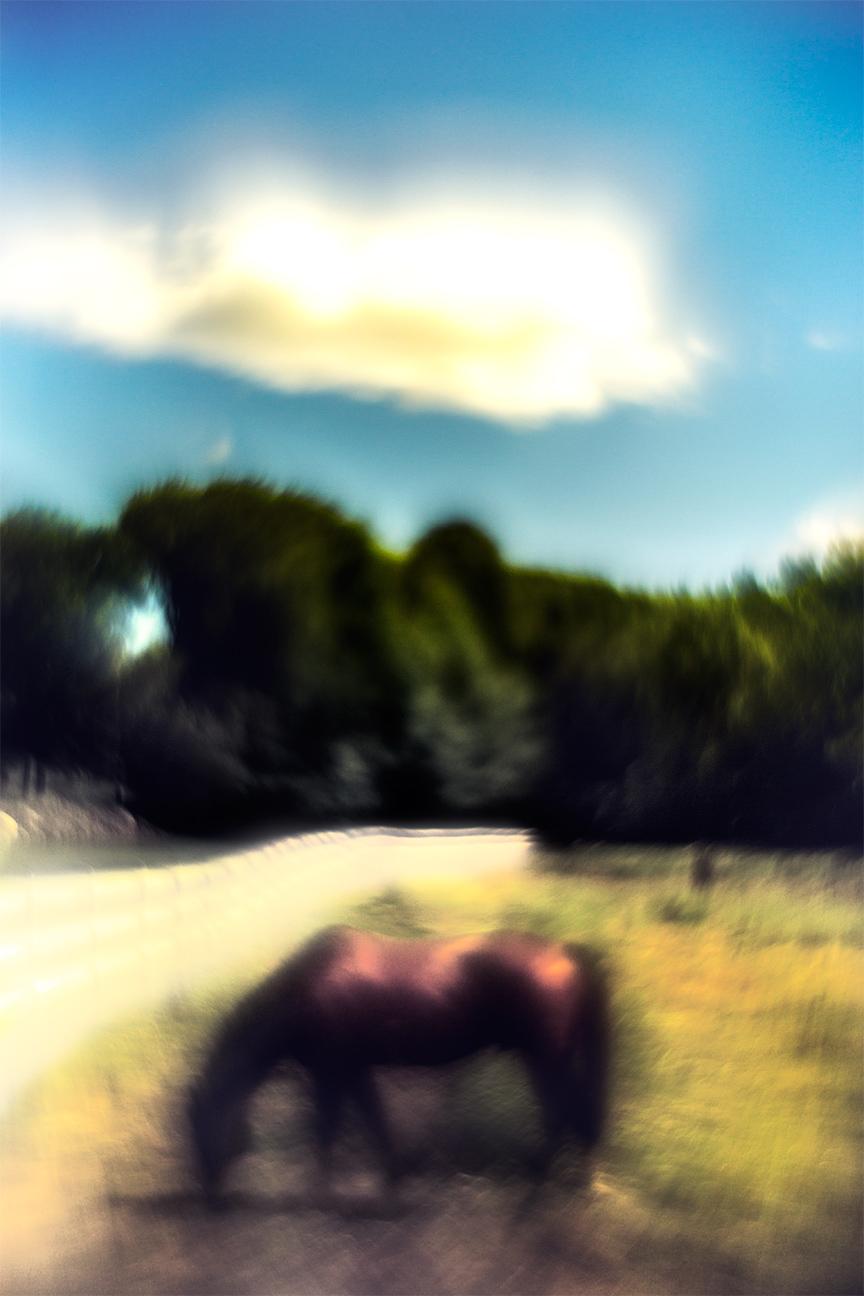 Horse_5725