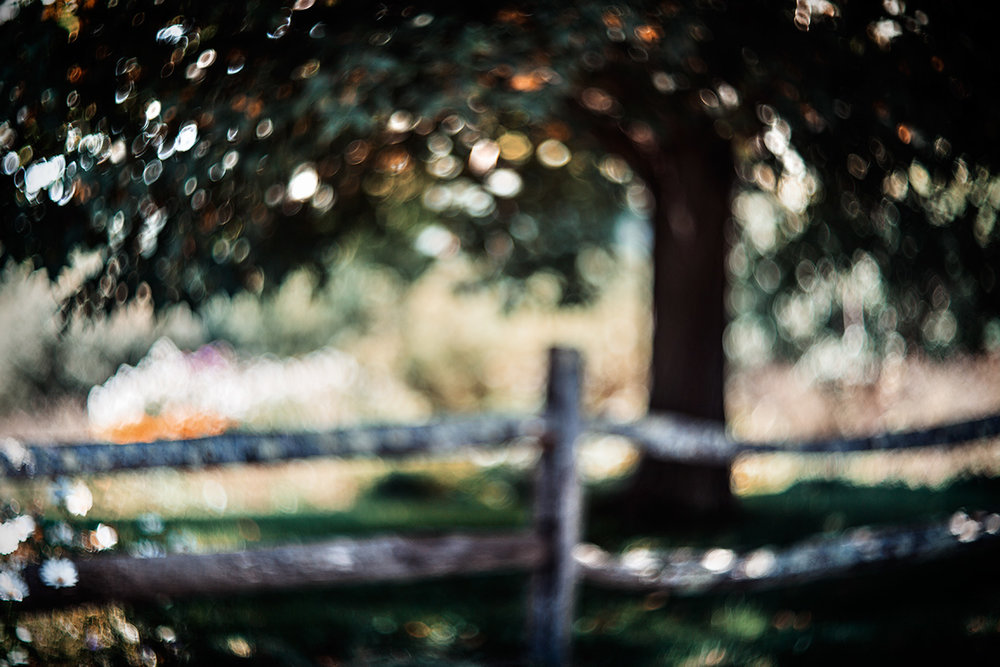 Fence-and-Tree_1465