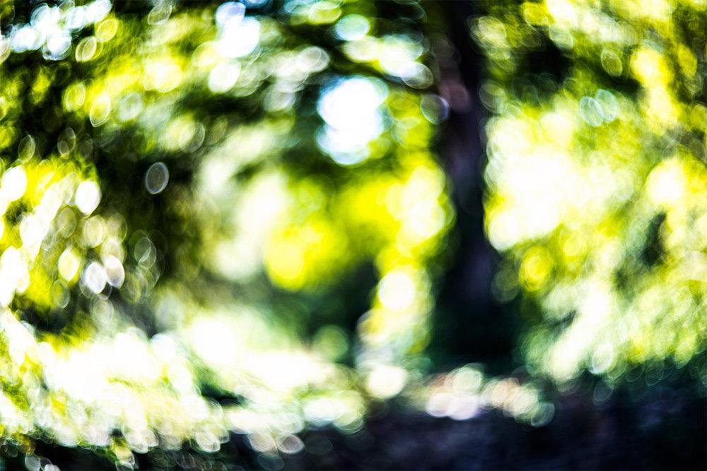 Summer-Tree_1809