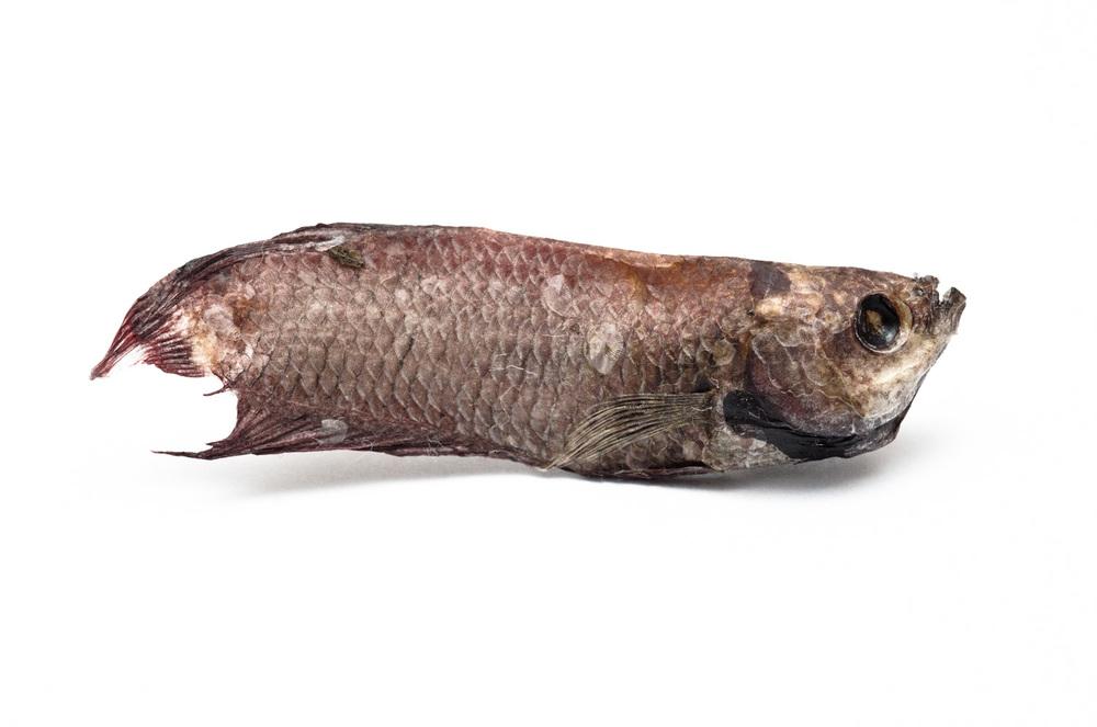 Dead Fish - 2011.jpg