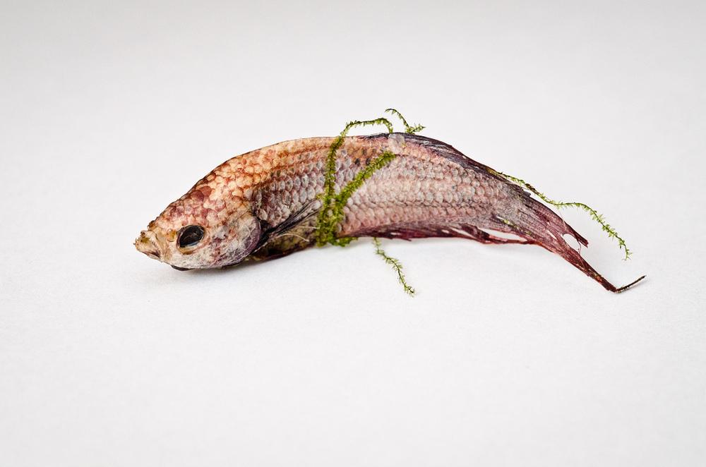 Dead Fish - 4 (2011).jpg