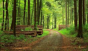 forest path small.jpg