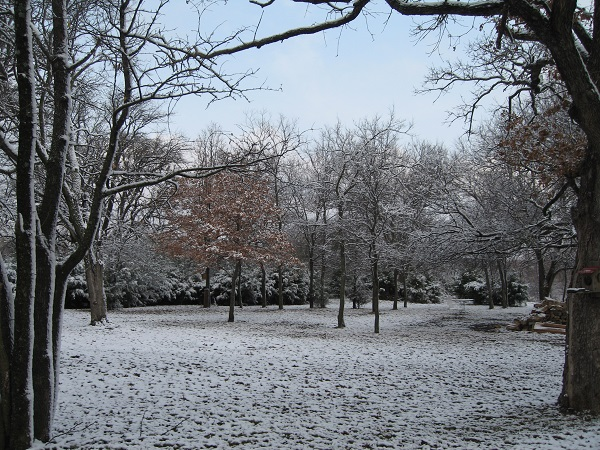 snow day Jan 020.jpg